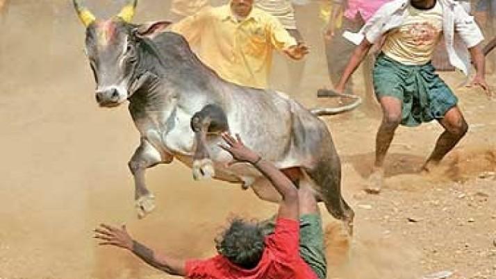 ஜல்லிக்கட்டு போட்டி நடத்த மாவட்ட கலெக்டர்களுக்கு சுற்றறிக்கை அனுப்புமாறு முதலமைச்சர் ஜெயலலிதா உத்தரவு