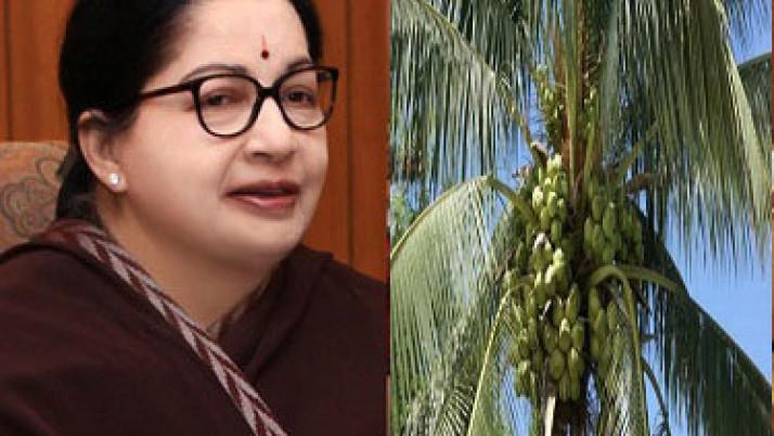 விவசாயிகளிடமிருந்து கொப்பரை தேங்காய் நேரடி கொள்முதல் : தேர்தல் வாக்குறுதியை நிறைவேற்றியதாக முதல்வர் ஜெயலலிதா பெருமிதம்